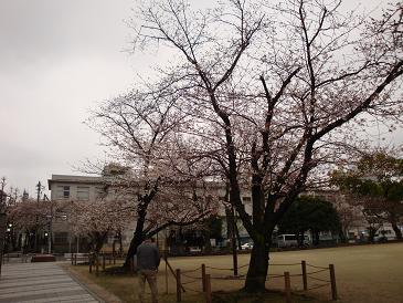 Hakata5