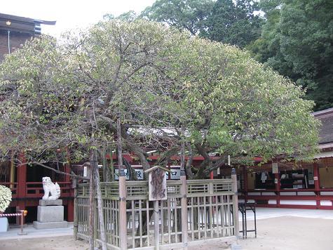 Dazaifu5