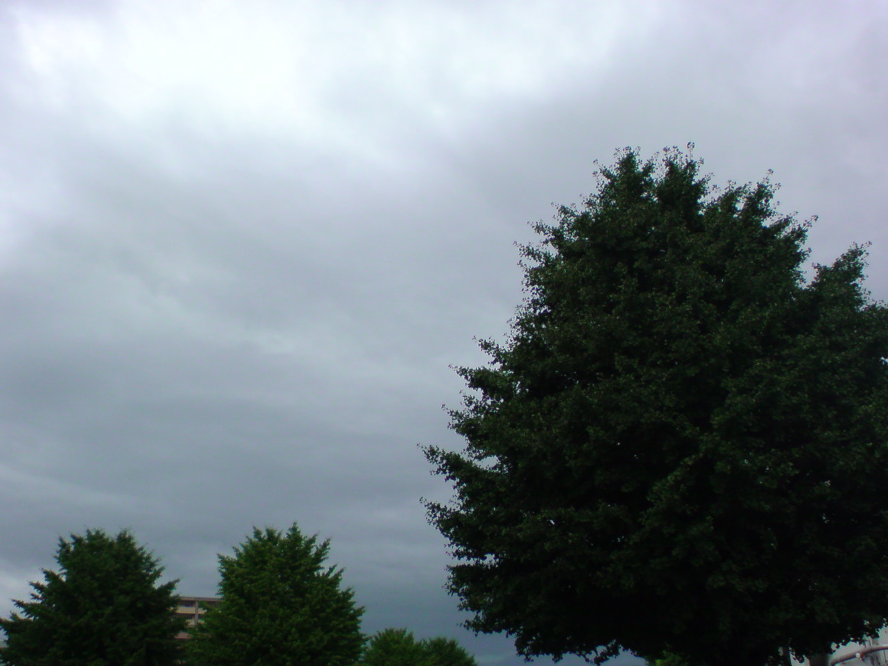 いきなり雨きましたぁ〜。