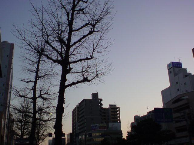 綺麗な夜明けですが...。